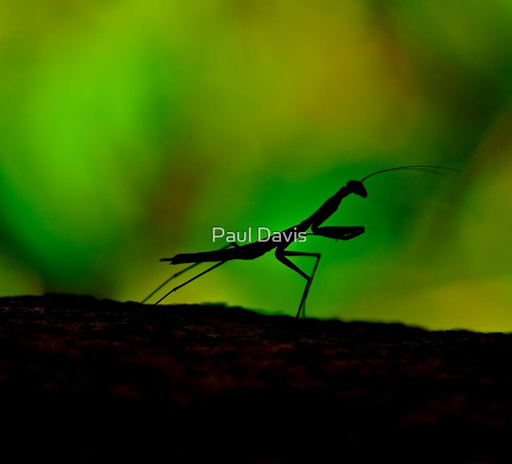 Mantis Silhouette by Paul Davis