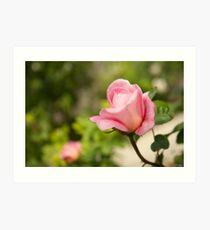 Smell the rose Art Print