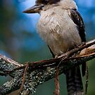 Kooka by Michael Eyssens