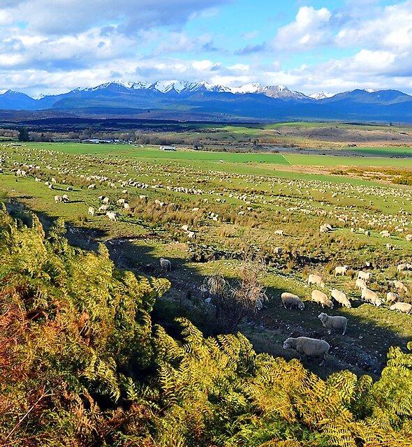 Sheep Station At Te Anau Downs. South Island, New Zealand. by Ralph de Zilva
