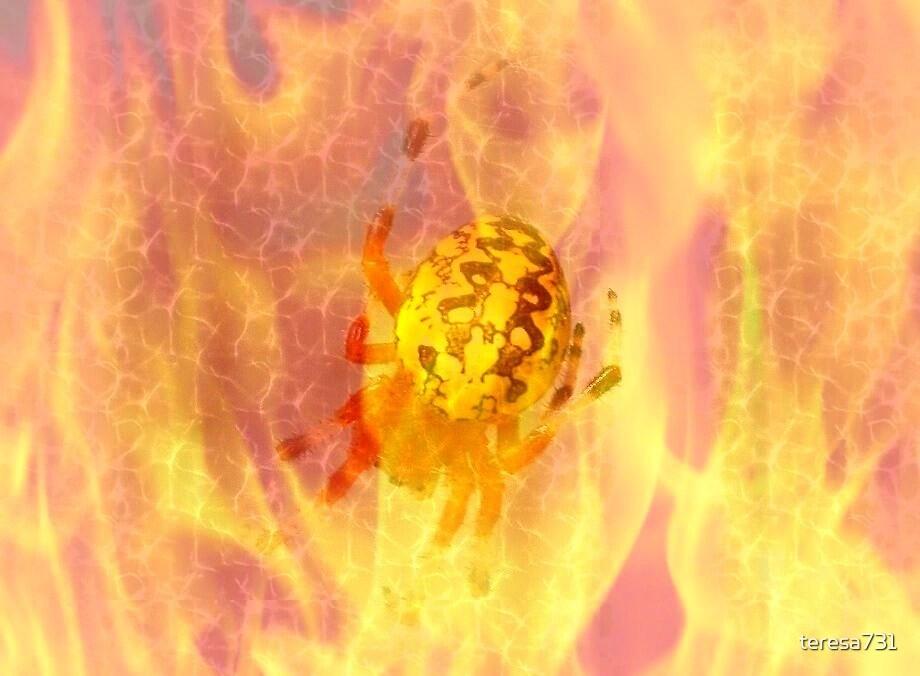 Orbweaver in Fire by teresa731