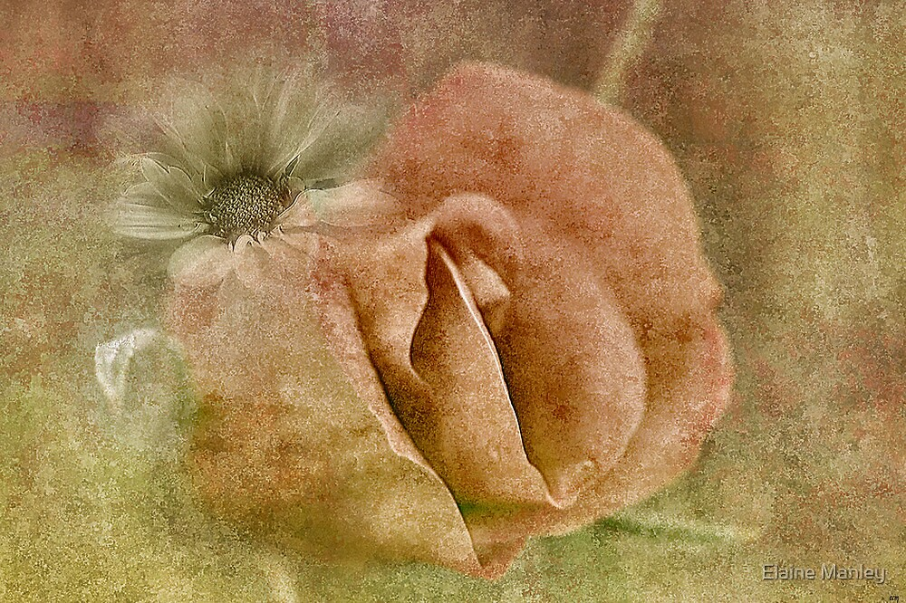 Fading Memories of Summer by Elaine Manley