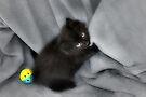 Kitten  by Elaine Manley