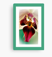 The Beauty Of An Orchid. Canvas Print