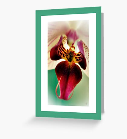 The Beauty Of An Orchid. Greeting Card