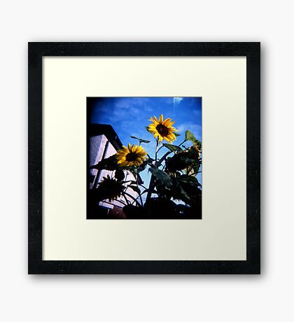 Just Someflowers Doing Their Thing And Doing It So Well Framed Print