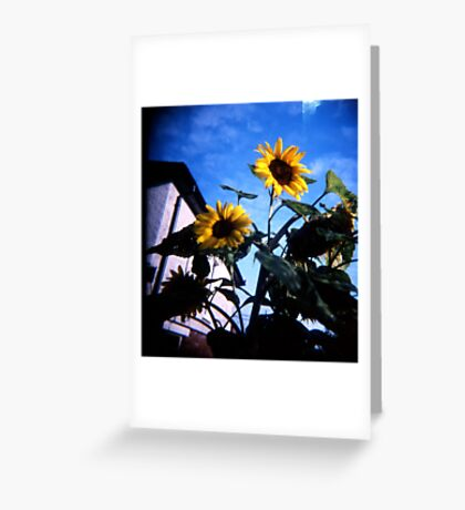 Just Someflowers Doing Their Thing And Doing It So Well Greeting Card