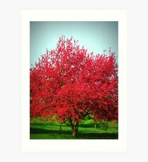 A Red Crab aplle Tree Art Print