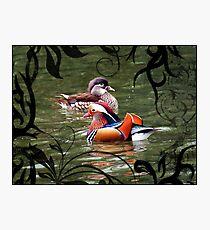 A pair of mandarin ducks Photographic Print