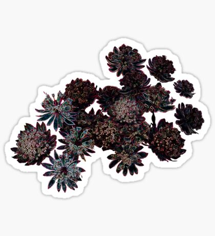Astrantia Fantasy - T-shirt Sticker
