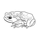 Black Giant Toad by MangaKid