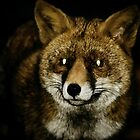 Fuchs von franceslewis