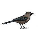 Brewer's Blackbird (Female) by KeesKiwi