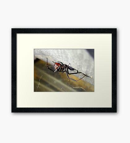 Black Widow ~ Female Framed Print