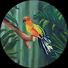 """Sun Conure. (Jungle Gardens, Sarasota, FL)"" by amyglasscockart"