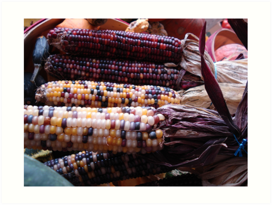 Indian Corn by May Lattanzio