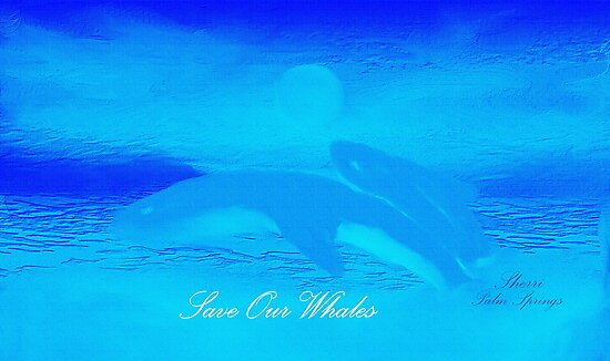 WHALES AND BEAUTIFUL PICTURES AND SOUND, by WHALEGEEK  by ARTIST GINA RUTTLE!! BEAUTIFUL& a wee picture I painted!!!  by SherriOfPalmSprings Sherri Nicholas-