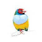 Goulian Finch by christinahewson