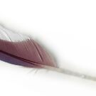 Budgie Feather by Lee Lee