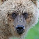 Grizzly up close!! by Anthony Goldman