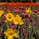 Spring at Floriade, Canberra by Leanne Nelson