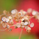 Autumn Melody by Stephanie Hillson