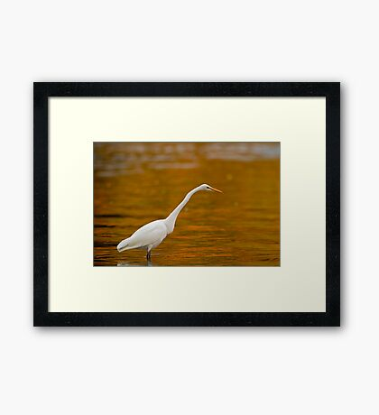 Early Morning Egret Framed Print