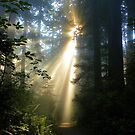 let the light guide you... by Clancey Meyer-Gilbride