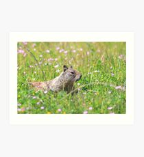 Groundhog in the Meadow Art Print