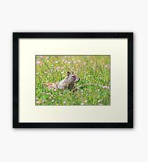 Groundhog in the Meadow Framed Print