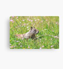 Groundhog in the Meadow Canvas Print