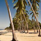 Coconut Palms - San Pancho by Lynnette Peizer