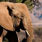 Desert elephant profile by Owed To Nature