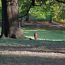 More Deer At Studley royal by dougie1page2