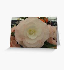 Large Flower show Bloom Greeting Card