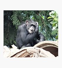 Ape Ideas Photographic Print