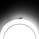 Gecko by laurentlesax