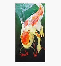 Libellenfisch Photographic Print