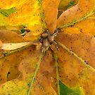 autumn oak leaves by AbsintheFairy