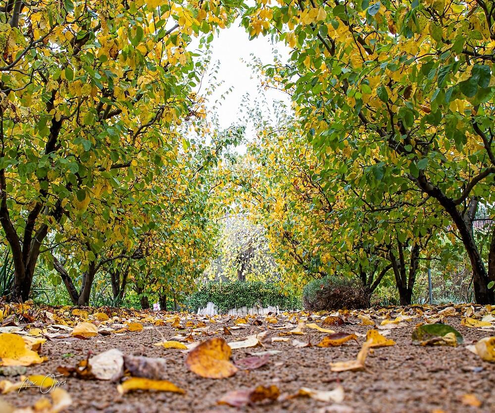 Fall in winter by Aiin Ojani