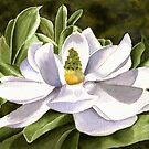 White Magnolia by Anne Sainz