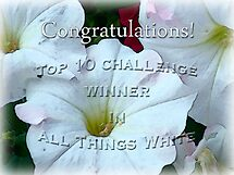 all things white banner challenge by vigor