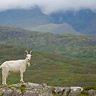 Hello Mr. Goat by julie08