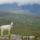 Hello Mr. Goat by Bente Agerup