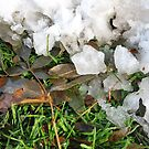 Snow, Ice, Leaves by Brian Rivera