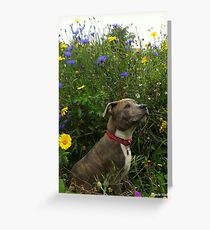 Millie amongst the wildflowers. Greeting Card
