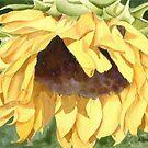 Sunflower by Anne Sainz