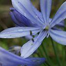 Purple beauty by jalewin
