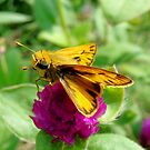 Tiny Yellow and Tan Butterfly by catherinemhowl