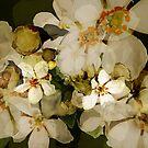 Alhambra Blossom II by BigFatArts